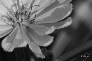IMG_5260-Edit